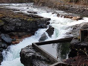 Stamp Falls, short hike, Port Alberni Vancouver Island